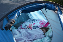 Child Camping Royalty Free Stock Photos