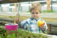 Child care. chil care of plants in greenhouse. child care concept. care your child by healthy eating and growing trees. Child care. chil care of plants in stock images