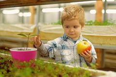 Child care. chil care of plants in greenhouse. child care concept. care your child by healthy eating and growing trees. Child care. chil care of plants in royalty free stock photography