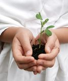 Child carefully holding a plant Stock Images