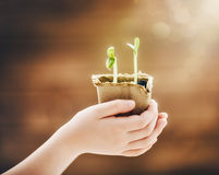 Child cares for plants Stock Photography
