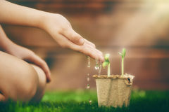 Child cares for plants Stock Images