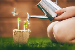 Child cares for plants Royalty Free Stock Images