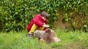 Child caress his shar pei puppy stock video footage