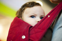 Child carried in sling. Curious child carried in sling staring at viewer Royalty Free Stock Image