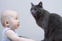 The child and cat. On grey background Royalty Free Stock Image