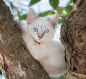 Child cat blue eye on tree Royalty Free Stock Images