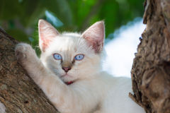 Child cat blue eye on tree Stock Photography