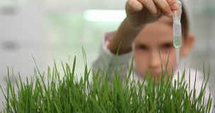 Child in Chemistry Lab, School Science Experiment, Growing Wheat Seedlings 4K.  stock video footage