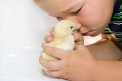 Child and chicken royalty free stock photo