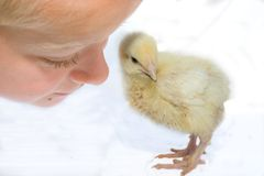 Child and chicken Stock Photos