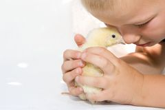 Child and chicken Stock Photo