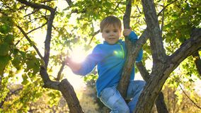 The child climbed a tree. He plays with berries and yellow leaves. Bright autumn Sunny day. Outdoor entertainment stock footage