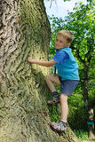 Child climbing big tree. Young child, a boy, climbing a big tree and smiling Stock Images