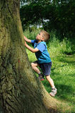 Child climbing tree. Young child, a boy, climbing a big tree and having fun Stock Photos