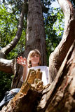 Child climbing tree forest Stock Images