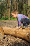 Child climbing trunk. Little child, young boy, climbing a trunk in the middle of forrest Stock Photography