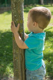 Child clinging to a tree Royalty Free Stock Image