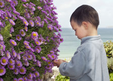 Child in the coastal garden Royalty Free Stock Photography