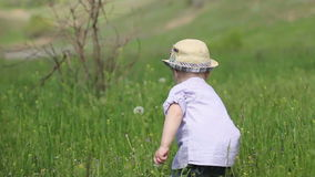 Child collecting dandelions stock video footage