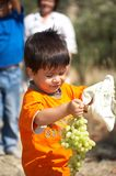 Child collecting grapes Royalty Free Stock Images