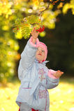 Child collects berries of rowanberry Stock Photos