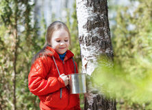Child collects birch sap in spring forest Stock Photography