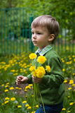 Child collects dandelions Royalty Free Stock Photography