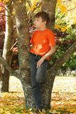 Child in colorful autumn trees Stock Photo