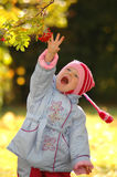 Child considers autumn berries Stock Images