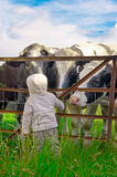 Child and Cows. A young child looking at some cows through a metal fence Stock Photo