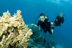 Child and dad scuba diving Stock Images