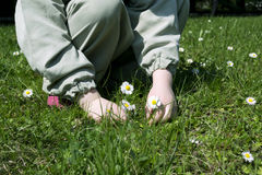 Child and daisies Stock Image