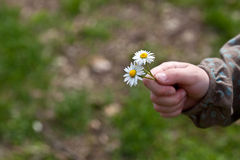 Child with daisy flower Royalty Free Stock Photography