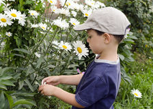 Child in daisy garden. Child in a garden exploring white daisy flowers royalty free stock photography