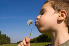 Child and dandelion Royalty Free Stock Photo