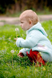 Child and dandelion. Child holding a dandelion and sitting on the green grass stock image