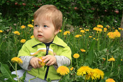 Child with the dandelion Stock Photography