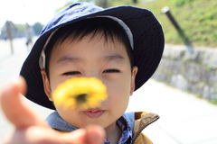 Child with dandelion Royalty Free Stock Image