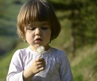 Child with a dandelion seed Royalty Free Stock Images