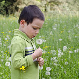 Child with dandelion Stock Photography