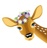 Child deer with vein on head Royalty Free Stock Images
