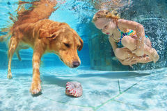 Child with dog dive underwater in swimming pool. Little child play with fun and train golden labrador retriever puppy in swimming pool - jump and dive underwater Royalty Free Stock Images
