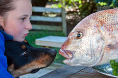 Child and dog with fish Royalty Free Stock Images