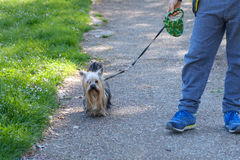 Child with dog leash Stock Photography