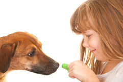 Child and dog, socializing and learning Royalty Free Stock Photos