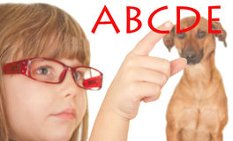 Child and dog, socializing and learning Royalty Free Stock Photo