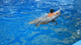 Child and dolphins. Teen boy swims with dolphin holding on to his fins stock video footage