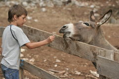 Child and donkey stock photography