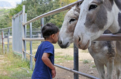 The child and the donkeys Royalty Free Stock Images